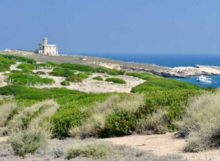 L'Isola di Capraia, quella dei capperi